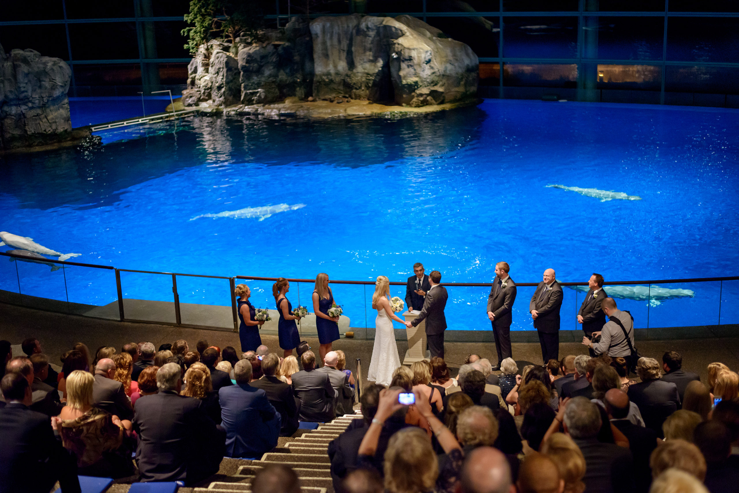 Wedding in front of aquarium tank