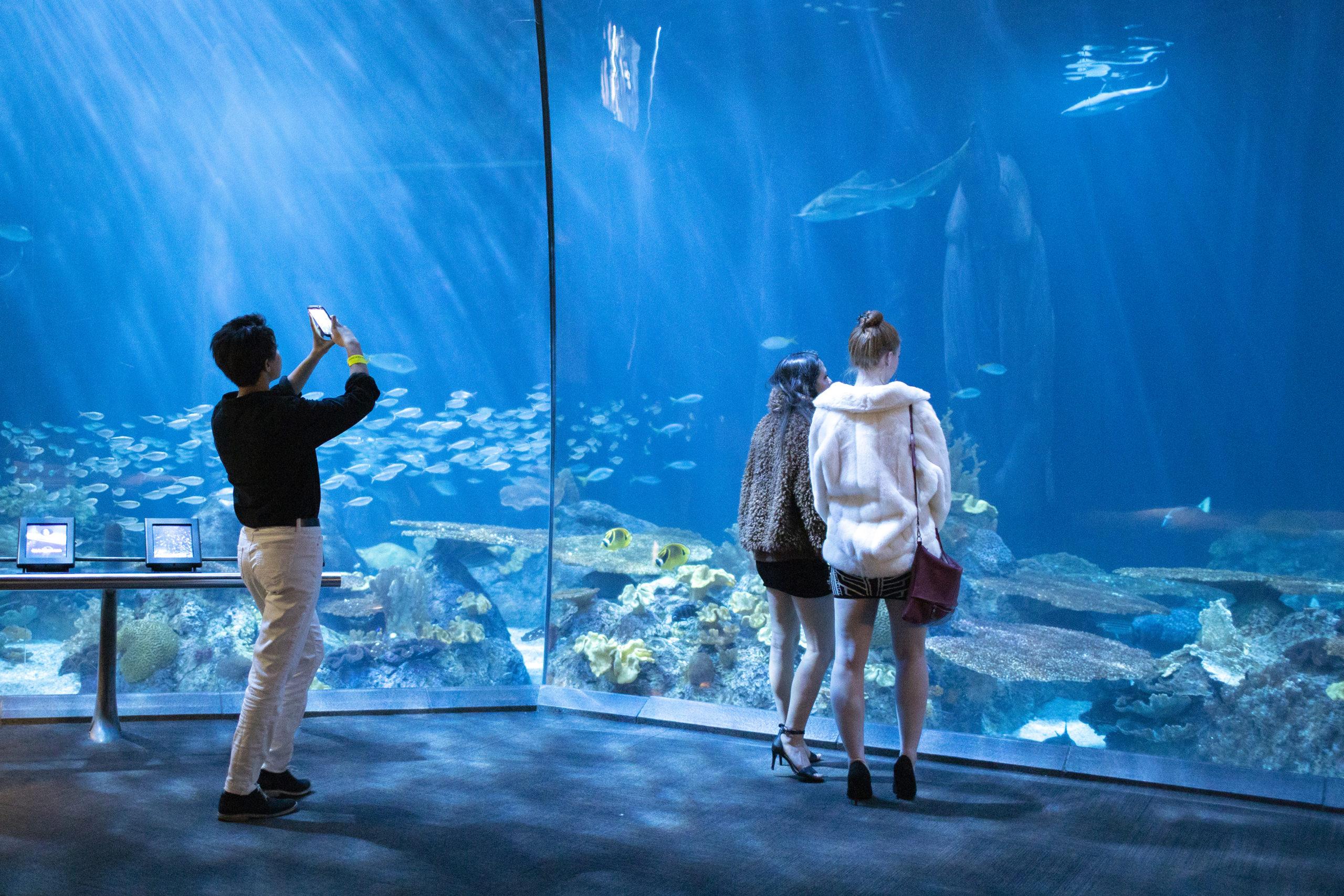 Guests enjoying Shedd Aquarium event