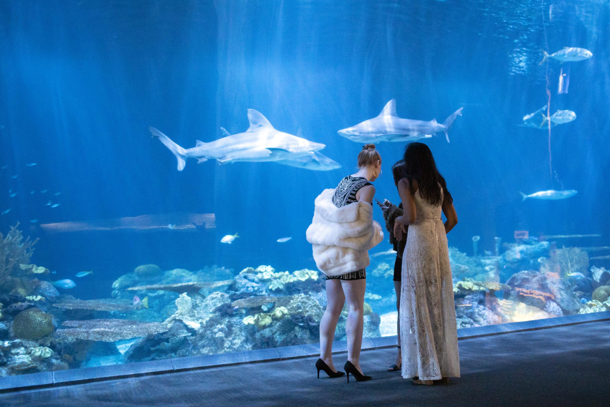 Guests enjoying a Shedd Aquarium event